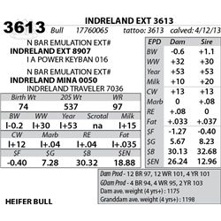 Lot 3613 - INDRELAND EXT 3613