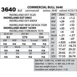 Lot 3640 - COMMERCIAL BULL 3640