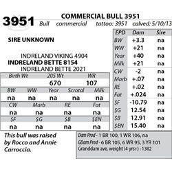 Lot 3951 - COMMERCIAL BULL 3951