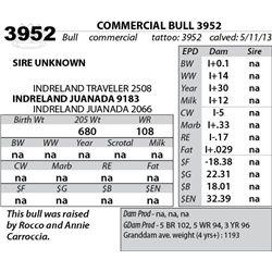 Lot 3952 - COMMERCIAL BULL 3952