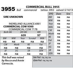 Lot 3955 - COMMERCIAL BULL 3955