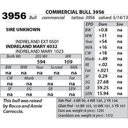 Lot 3956 - COMMERCIAL BULL 3956