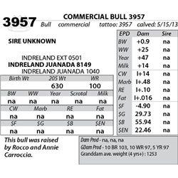 Lot 3957 - COMMERCIAL BULL 3957