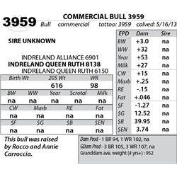 Lot 3959 - COMMERCIAL BULL 3959