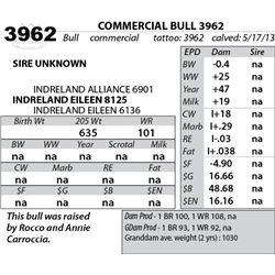 Lot 3962 - COMMERCIAL BULL 3962