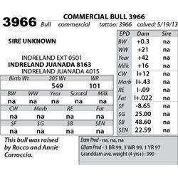 Lot 3966 - COMMERCIAL BULL 3966