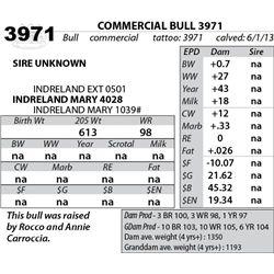 Lot 3971 - COMMERCIAL BULL 3971