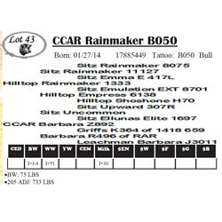 Lot 43 - CCAR Rainmaker B050
