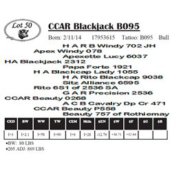 Lot 50 - CCAR Blackjack B095
