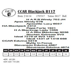 Lot 55 - CCAR Blackjack B117