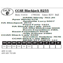 Lot 56 - CCAR Blackjack B255