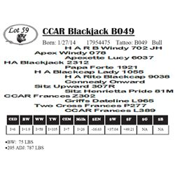 Lot 59 - CCAR Blackjack B049