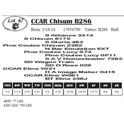 Lot 67 - CCAR Chisum B286