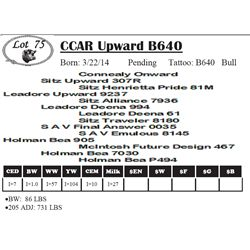 Lot 75 - CCAR Upward B640