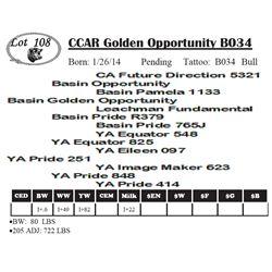 Lot 108 - CCAR Golden Opportunity B034