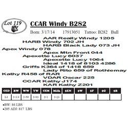 Lot 119 - CCAR Windy B282
