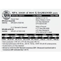 Lot 11 - SPA 3068 of 809 X DAMGOOD [DDP]