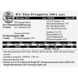 Lot 30 - ICC Eisa Evergreen 3001 [DDP]