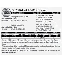 Lot 35 - SPA 307 of 1067 XCr [DDP]