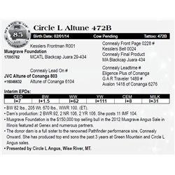 Lot 85 - Circle L Altune 472B