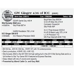 Lot 69A - GW Ginger 436 of ICC [DDP]