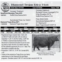 Lot 88R - Diamond Trojan Erica 7546