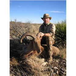 Trophy Aoudad/Barbary Sheep Hunt for Two Hunter's
