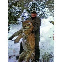 2015 Utah Statewide Cougar