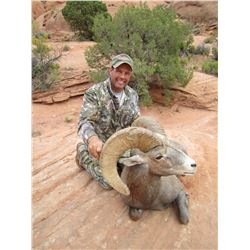 2015 Utah San Juan LaSal Desert Bighorn Conservation Permit