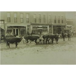 Old Black and White photo of cattle and cowboys