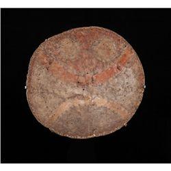 Comanche / Pueblo Shield