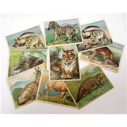 LOT OF 9 1911 T29 HASSAN TOBACCO TRADING CARDS - ANIMALS