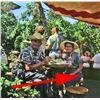 Image 7 : Chicken of the Sea Pirate Ship Restaurant barrel seat.