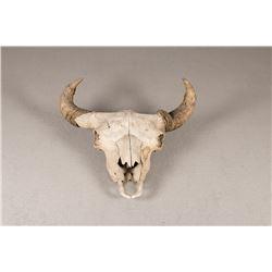 "19th Century Buffalo Skull, 20"" x 26"""