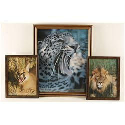 Lot of 3 Fine Art Photos by Willy Zing