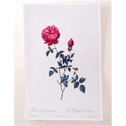 """ROSE LITHO POSTER PRINT APPROX. 11"""" X 17"""""""