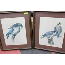 PAIR OF WOOD FRAMED BIRD PICTURES