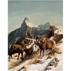 Rocky Mountain Big Horn