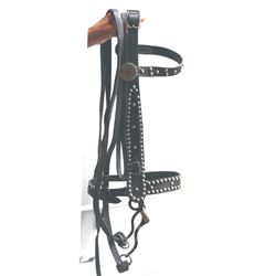 nice spotted bridle with Crockett bit