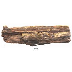 Section of petrified wood from New Mexico (approx. 100-200 million years old).