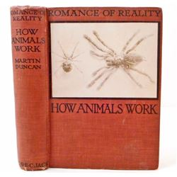 """1919 """"HOW ANIMALS WORK"""" ILLUSTRATED HARDCOVER BOOK"""