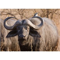 10-Day Cape Buffalo Hunt for One Hunter and One Non-Hunter in Tanzania - Includes Trophy Fee