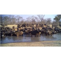 7-Day Cape Buffalo Hunt for One Hunter in Zimbabwe AND Heym Model 88-B  Safari  .500 Nitro Express R