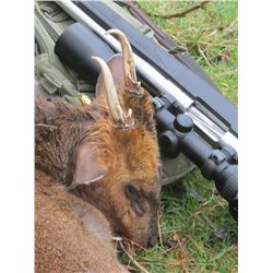 4-Day Roe Deer Hunt for Two Hunters in Scotland - Includes Trophy Fees