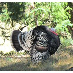 4-Day Wild Turkey Hunt for Two Hunters in New Mexico - Includes Trout Fishing Opportunities