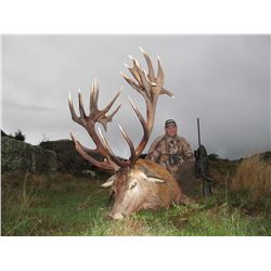 5-Day Red Stag Hunt for One Hunter in New Zealand - Includes Trophy Fee