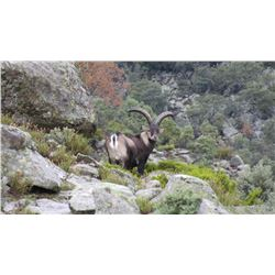3-Day Spanish Ibex Hunt for One Hunter and One Non-Hunter - Includes Trophy Fees