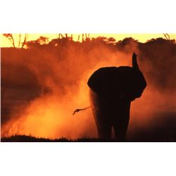 7-Day Tuskless Elephant Hunt for One Hunter and One Non-Hunter in Zimbabwe