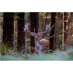 4-Day European Fallow Deer or Roe Deer Hunt for Two Hunters in Spain - Includes Trophy Fees
