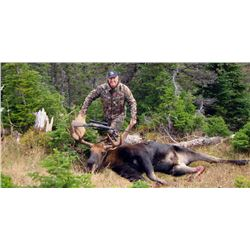 6-Day Moose and Black Bear Hunt for One Hunter in Newfoundland, Canada - Includes Trophy Fees